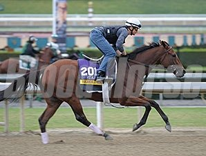 Beholder works towards the Breeders' Cup.