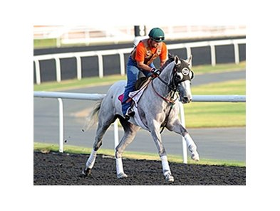 He's Had Enough in Dubai.
