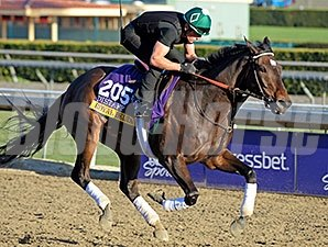 Royal Delta - Breeders' Cup, 10/31/2013