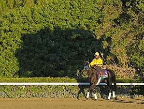 Great Hot - Breeders' Cup 2012