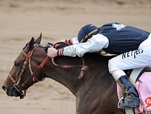 Mine That Bird Gets Final Tune-up For Whitney