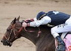 Haskin's Belmont Report: Love That Bird