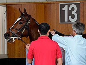 Untapable schools in the paddock at Churchill Downs, April 30, 2014