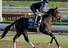 Merit Man at Santa Anita 10/29/2012.