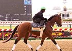 Goldencents jogged at Pimlico on May 9.