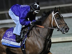 Cease in a Breeders' Cup Work.