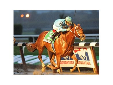 "Haynesfield most recently won the Empire Classic at Belmont on October 24.<br><a target=""blank"" href=""http://www.bloodhorse.com/horse-racing/photo-store?ref=http%3A%2F%2Fpictopia.com%2Fperl%2Fgal%3Fprovider_id%3D368%26ptp_photo_id%3D8575021%26ref%3Dstory"">Order This Photo</a>"
