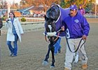 Zenyatta at the Breeders' Cup.