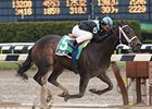 Dream Play Wires Comely On Sloppy Track