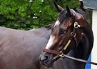 "Rachel Alexandra at Belmont Park on June 23.<br><a target=""blank"" href=""http://www.bloodhorse.com/horse-racing/photo-store?ref=http%3A%2F%2Fpictopia.com%2Fperl%2Fgal%3Fprovider_id%3D368%26ptp_photo_id%3D8266928%26ref%3Dstory"">Order This Photo</a>"