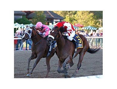 Blind Luck (left) and Havre de Grace met 4 times in 2010.
