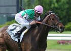 Treat Gently Solid Fit in Hollywood Turf Cup