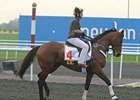 Gio Ponti checks out the track at Meydan.