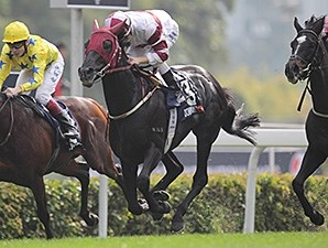 Dominant wins the Hong Kong Vase.