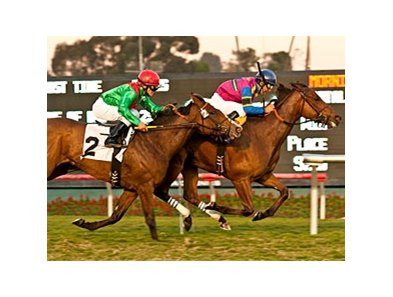 Star Billing gets up late to win the Matriarch at Hollywood Park.