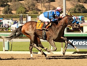 Secret Compass wins the 2013 Chandelier.