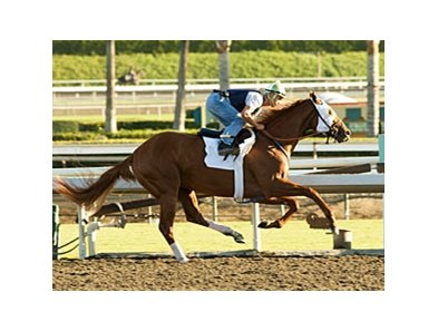 "Summer Bird works at Santa Anita on October 17.<br><a target=""blank"" href=""http://www.bloodhorse.com/horse-racing/photo-store?ref=http%3A%2F%2Fpictopia.com%2Fperl%2Fgal%3Fprovider_id%3D368%26ptp_photo_id%3D8560548%26ref%3Dstory"">Order This Photo</a>"