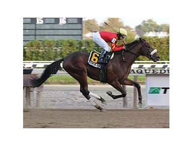 "Breakwater Edison wins the Nashua in impressive fashion at Aqueduct Nov. 2. <br><a target=""blank"" href=""http://www.bloodhorse.com/horse-racing/photo-store?ref=http%3A%2F%2Fpictopia.com%2Fperl%2Fgal%3Fprovider_id%3D368%26ptp_photo_id%3D6571312%0D%0A%26ref%3Dstory"">Order This Photo</a>"
