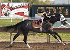 Turf Paradise winner Nikki'sgoldensteed is the only stakes winner in the El Camino Real Derby.