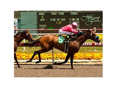 Ultra Blend wins the Milady Handicap.