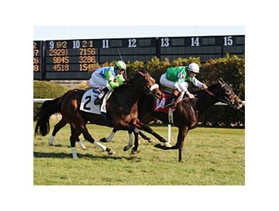 "Lentenor (left) finished 2nd behind On Vacation.<br><a target=""blank"" href=""http://www.bloodhorse.com/horse-racing/photo-store?ref=http%3A%2F%2Fpictopia.com%2Fperl%2Fgal%3Fprovider_id%3D368%26ptp_photo_id%3D8659021%26ref%3Dstory"">Order This Photo</a>"