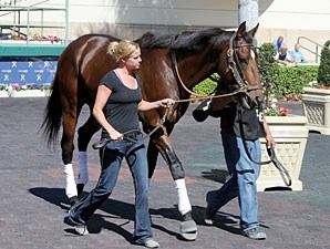 Point of Entry - Gulfstream Park, February 1, 2013.
