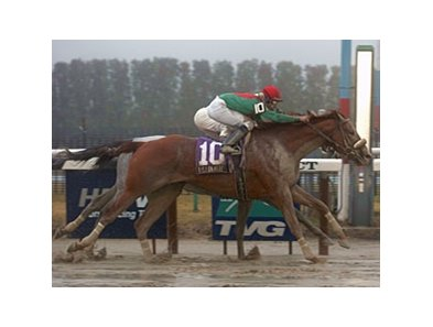 "Visionaire comes from way back to nip Texas Wildcatter in a foggy Gotham.<br><a target=""blank"" href=""http://www.bloodhorse.com/horse-racing/photo-store?ref=http%3A%2F%2Fpictopia.com%2Fperl%2Fgal%3Fprovider_id%3D368%26ptp_photo_id%3D3788376%26ref%3Dstory"">Order This Photo</a>"