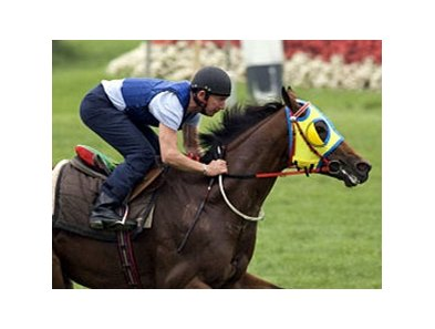 Archipenko works on the Arlington turf on August 5.