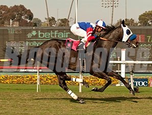 Halo Dolly wins the Wilshire Handicap.