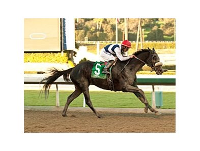 Eblouissante returns to the races in the Shuvee Handicap.