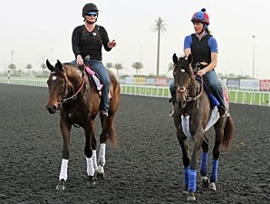Royal Delta and Lucky Chappy in Dubai.