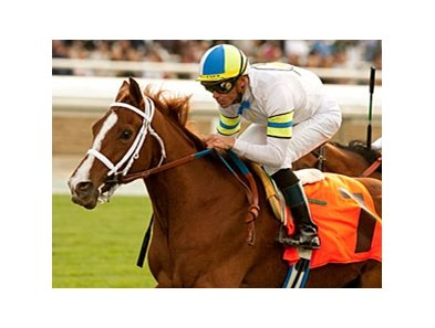 Cambina takes on 10 in the Santa Ana Stakes on March 25.