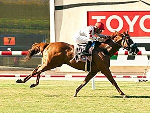 Lil Bit O'Fun wins the 2014 Wickerr Stakes.