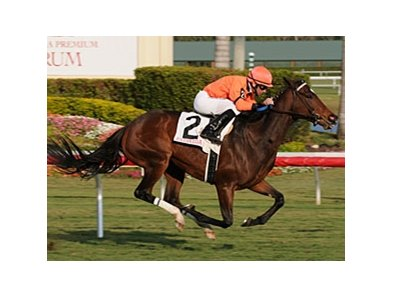 "Wild Promises won the Sunshine Millions Filly & Mare Turf Jan. 24 at Gulfstream Park.<br><a target=""blank"" href=""http://www.bloodhorse.com/horse-racing/photo-store?ref=http%3A%2F%2Fpictopia.com%2Fperl%2Fgal%3Fprovider_id%3D368%26ptp_photo_id%3D7535425%26ref%3Dstory"">Order This Photo</a>"