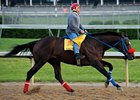 "Tomcito, who was denied entry into the Kentucky Derby, will try to use the Peter Pan as a prep for the Belmont.<br><a target=""blank"" href=""http://www.bloodhorse.com/horse-racing/photo-store?ref=http%3A%2F%2Fpictopia.com%2Fperl%2Fgal%3Fprovider_id%3D368%26ptp_photo_id%3D4444737%26ref%3Dstory"">Order This Photo</a>"