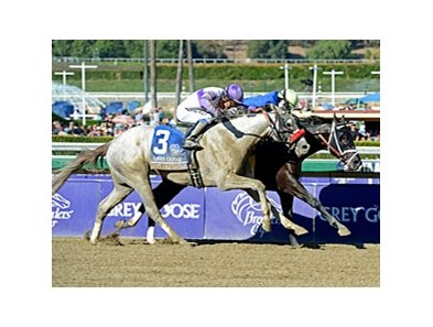 "He's Had Enough finished 2nd in the 2012 Breeders' Cup Juvenile.<br><a target=""blank"" href=""http://photos.bloodhorse.com/BreedersCup/2012-Breeders-Cup/Juvenile/26130125_Wz4K8f#!i=2194440122&k=mT36BvZ"">Order This Photo</a>"