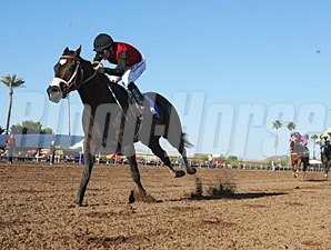 Persuasive Paul wins the 2013 Turf Paradise Derby.