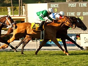 Fluke wins the 2011 Frank E. Kilroe Mile.