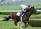 Rachel Alexandra worked 5 furlongs at Churchill Downs on April 16.