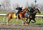 Terrain (left) worked at Keeneland on April 4 in preparation for the Blue Grass Stakes.