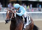 "Cluster of Stars won the 2013 Gallant Bloom. <br><a target=""blank"" 