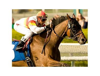 "Bourbon Bay will carry top weight of 121 pounds in the Cougar II.<br><a target=""blank"" href=""http://www.bloodhorse.com/horse-racing/photo-store?ref=http%3A%2F%2Fpictopia.com%2Fperl%2Fgal%3Fprovider_id%3D368%26ptp_photo_id%3D8850002%26ref%3Dstory"">Order This Photo</a>"