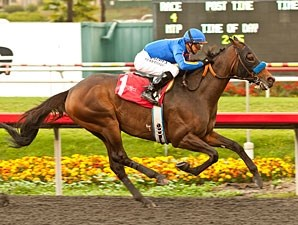 Game On Dude wins the 2012 Native Diver.