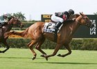Ginger Brew Favored in Woodbine Oaks