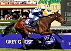 "Goldikova, seen here winning the '08 Breeders' Cup Mile, continued to march towards this year's Cup with another powerful performance.<br><a target=""blank"" href=""http://www.bloodhorse.com/horse-racing/photo-store?ref=http%3A%2F%2Fpictopia.com%2Fperl%2Fgal%3Fprovider_id%3D368%26ptp_photo_id%3D6457157%26ref%3Dstory"">Order Photo.</a>"
