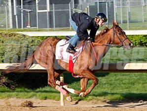 Rose to Gold works at Churchill Downs.