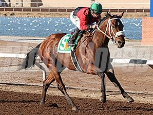 Proceed wins the 2014 Albert Dominguez Memorial Handicap.