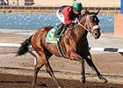 Proceed was honored as the champion New Mexico-bred 3-year-old colt or gelding for 2014.