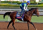 "Secret Circle, last year's Sprint winner, starts from post 4 in 2014.<br><a target=""blank"" href=""http://photos.bloodhorse.com/BreedersCup/2014-Breeders-Cup/Works/i-md7TFm6"">Order This Photo</a>"