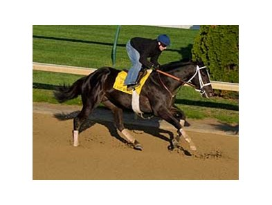 "I Want Revenge working at Churchill Downs on April 21.<br><a target=""blank"" href=""http://www.bloodhorse.com/horse-racing/photo-store?ref=http%3A%2F%2Fpictopia.com%2Fperl%2Fgal%3Fprovider_id%3D368%26ptp_photo_id%3D8026730%26ref%3Dstory"">Order This Photo</a>"